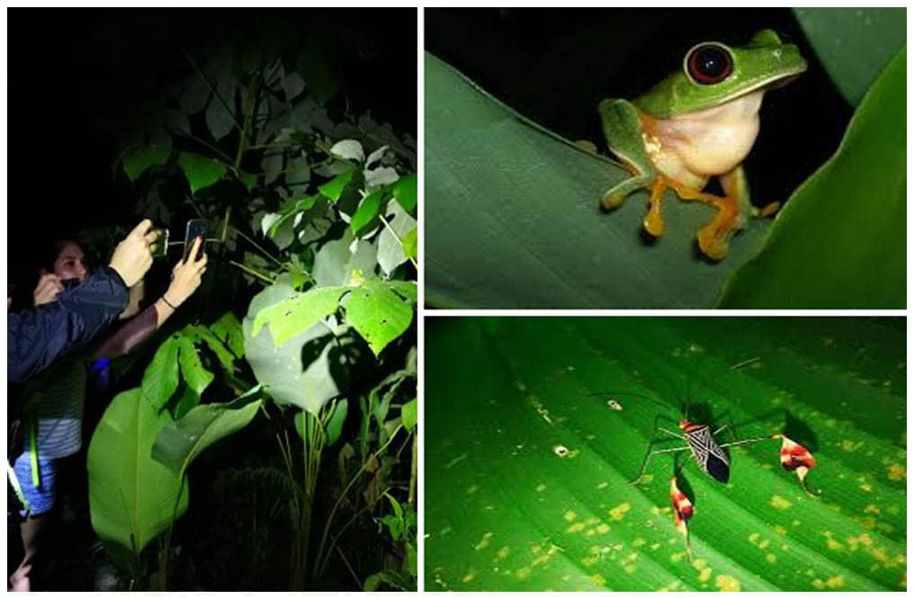 MANUEL ANTONIO NIGHT JUNGLE TOUR